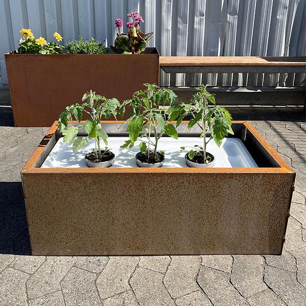 Tomatkasse med planter